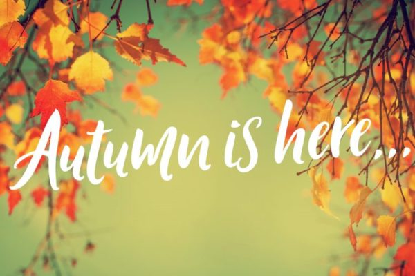 Awesome Autumn Collections